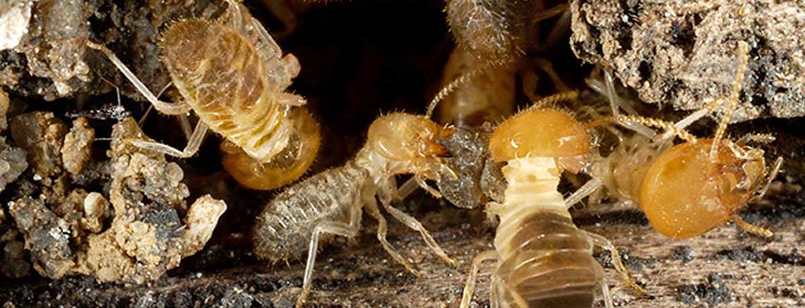 Pest Inspectors Melbourne